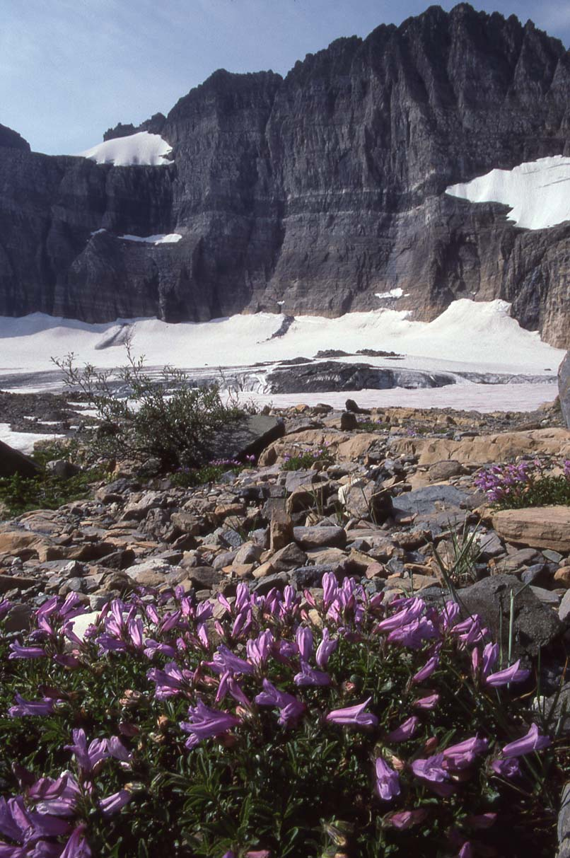 Glacier NP Aug-1990 Iceberg Lake 4.jpg
